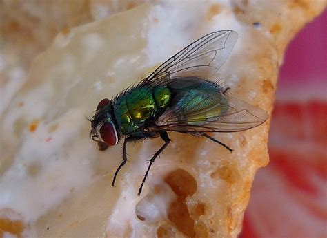 Should I throw away food once a fly has landed on it